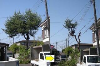 立木の伐採
